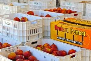 Hudson Farms Fruit