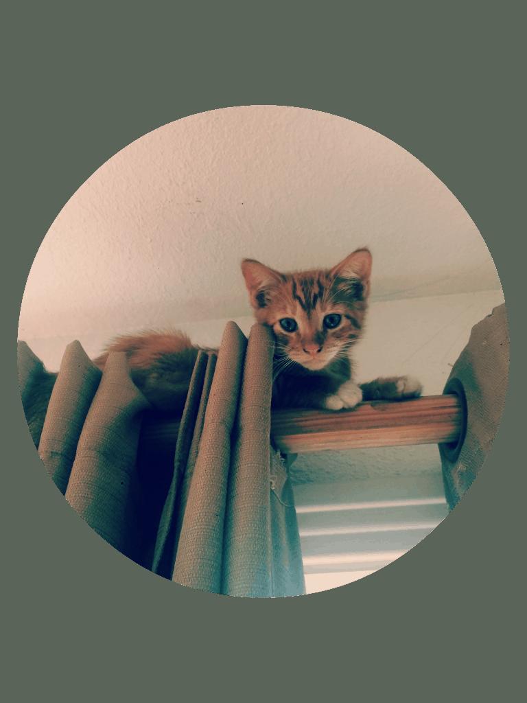 pumpkin kitten