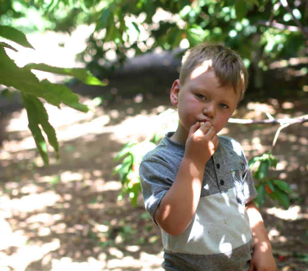 boy eating cherry for cherry hand pies